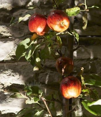 Walled Garden, Wiltshire